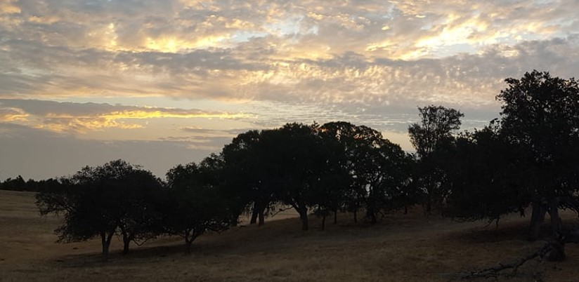Weekend weather will be mild but breezy