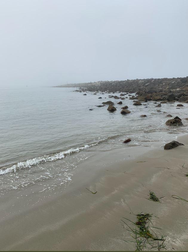 Dense fog advisory issued through the morning drive